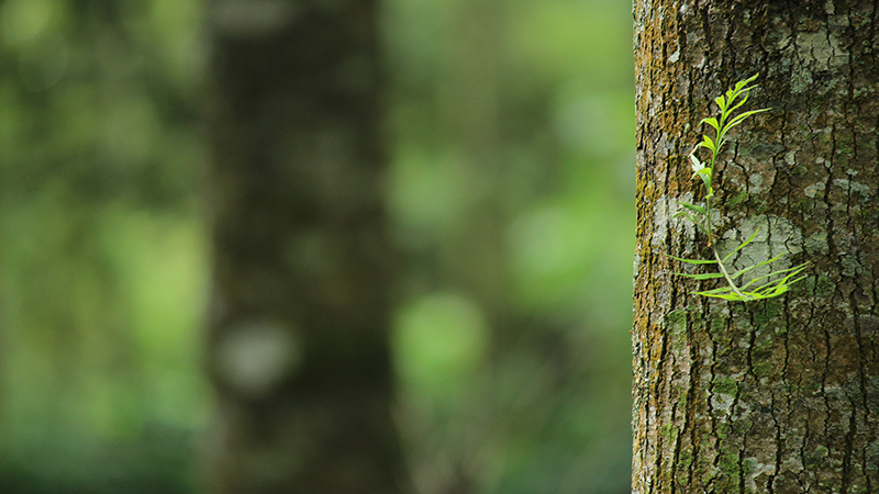 green-tree-bark