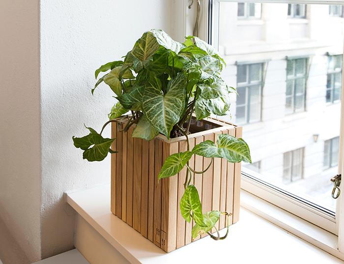 wooden-cubic-planter